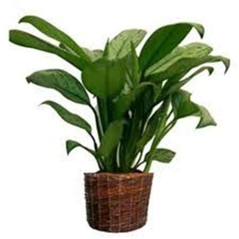 l utilit 233 des plantes en feng shui fengshuiharmonie