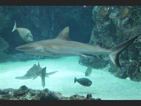 la grotte des requins 224 oc 233 anopolis geo fr
