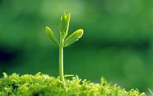 壁纸1680×1050新芽嫩叶高清绿色植物壁纸 三 壁纸25壁纸,新芽嫩叶高清绿色植物壁纸图片-植物壁纸-植物图片 ...