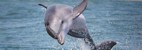 Virginia Aquarium Dolphin Watching Boat Trips by 25 Best Ideas About Whale Watching Boat On Pinterest