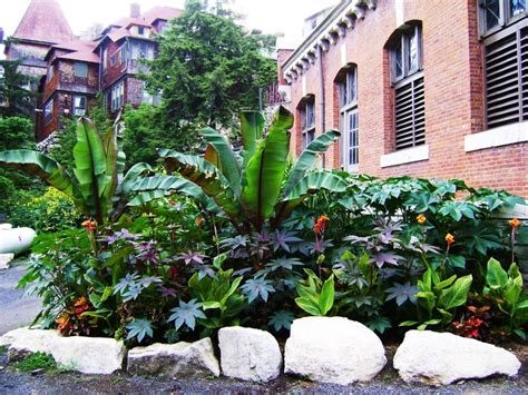 The Abyssinian Ensete (banana Cousins), Shown Here