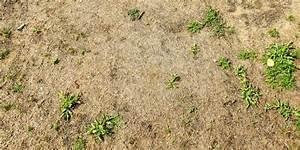 Wann Wächst Rasen : da kommt nichts mehr lzonline ~ Markanthonyermac.com Haus und Dekorationen