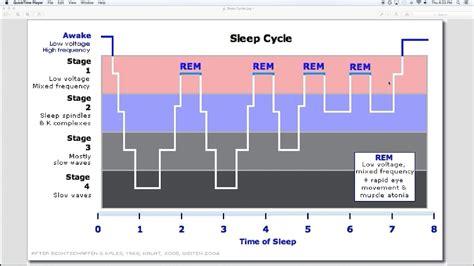 Sleep Wake Cycle by Sleep 7 Sleep Cycles Youtube