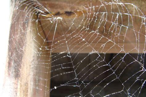 des toiles d araign 233 e sur une plaie les quatre saisons
