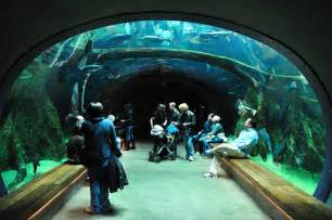 a survey of awesome aquarium architecture page 2