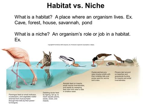 What Is Ecology? A Branch Of Biology That Deals With The