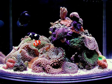 gallon nano reef tank quotes