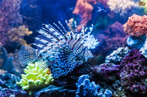 the most common mistakes novice marine aquarium keepers make pets4homes