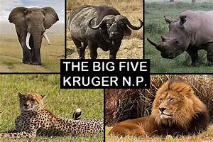 SOUVENIR FRIDGE MAGNET of THE BIG 5 in KRUGER NATIONAL ...