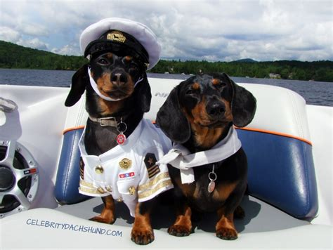 Dog Boat Captain by Dachshunds On A Boat Captain Crusoe First Mate Oakley