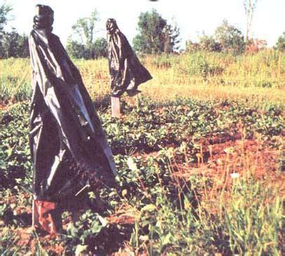 Diy Scarecrow For Garden make a simple diy scarecrow organic gardening