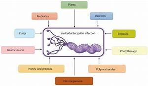 Exploring alternative treatments for Helicobacter pylori ...