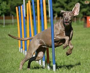 a short explanation of dog agility training equipment