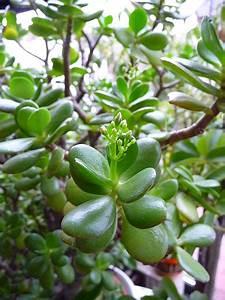 Feng Shui Pflanzen Reichtum : feng shui und die wirkung der pflanzen everyday feng shui ~ Markanthonyermac.com Haus und Dekorationen