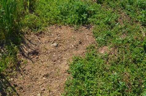 ce week end au potager le faux semis contre les mauvaises herbes jacky la verte