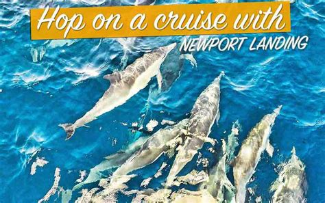 Party Boat Fishing Southern California by Newport Landing Sportfishing Southern California Fishing