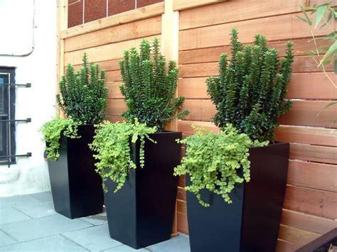 4 conseils jardinage pour les plantes en pots