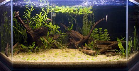 d 233 co terrasse aquarium