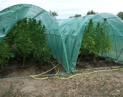 forcer la floraison de votre cannabis en ext 233 rieur biotops biz