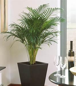 Pflanzen Für Wohnzimmer : bergerhoff gr n erleben zimmerpflanzen f r ein gutes raumklima ~ Markanthonyermac.com Haus und Dekorationen