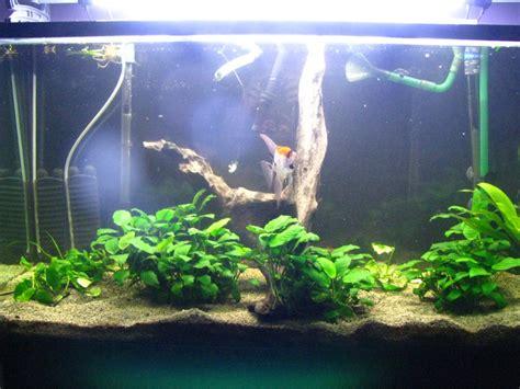 aquariums 224 vendre