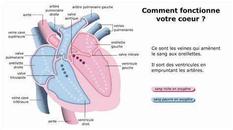 comment votre coeur fonctionne t il