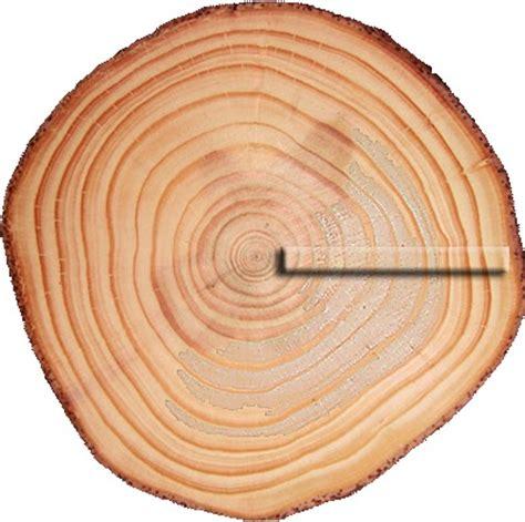 les bois de l ukul 233 l 233 anatomie de l ukul 233 l 233