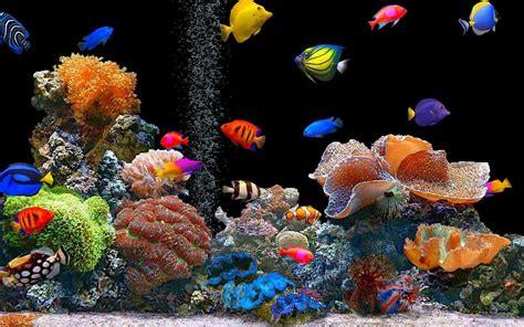 aquarium live wallpaper play store revenue estimates us