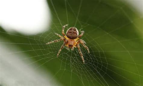comment se d 233 barrasser des araign 233 es de la maison sans les tuer