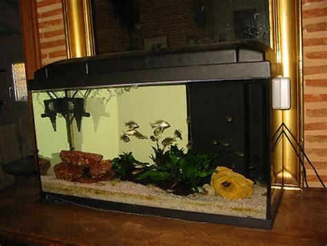 de petites vacances de cichlidophile eau douce divers aquarium webzine l aquariophilie d