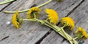 How to Make a Dandelion Flower Crown with Real Flowers ...