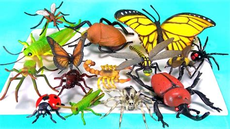 Insects Names For Kids Learn Colors Bugs Toy Videos For Children Teaching Baby Toddler