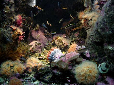 visite de l aquarium de sydney aquarium r 233 cifal aquarium marin aquarium eau de mer