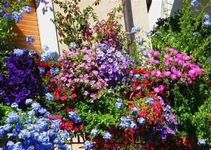 Die Schönsten Balkonpflanzen : fleurs de balcon en plein soleil id es sur les arrangements ~ Markanthonyermac.com Haus und Dekorationen