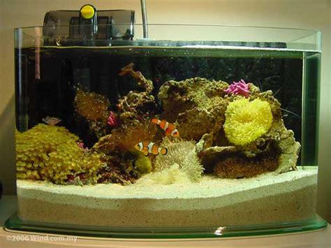 aquarium aquarium eau douce aquarium eau de mer dinosoria