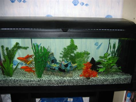 photo d 233 coration aquarium poisson