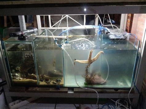 aquarium mer p 233 dagogique pour la maison eau de mer forum aquariophilie aquarium aquaryus