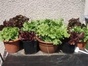 hortus meo afficher le sujet le potager au balcon