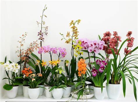 comment soigner les orchid 233 es selon leurs vari 233 t 233 s