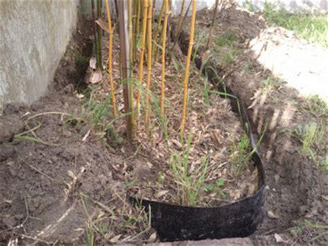planter une haie de bambous en pleine terre consommer durable