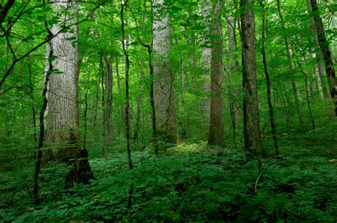 Us Forests Shifting With Climate Change  The News Buzz