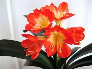 Pflegeleichte Zimmerpflanzen Mit Blüten : robuste zimmerpflanzen beliebte pflegeleichte topfpflanzen ~ Markanthonyermac.com Haus und Dekorationen