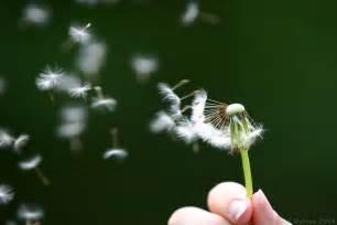 AZUMA Leasing: The Incredible Edible  Dandelion!