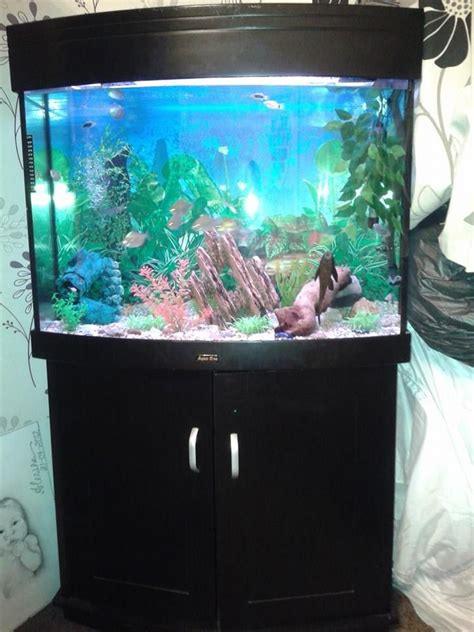 tropical fish tank for sale dorchester dorset pets4homes