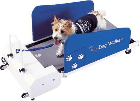 le forum des border terriers walker le tapis de course pour chien