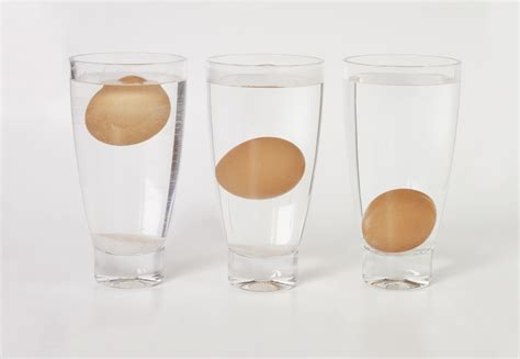 why rotten eggs float scientific explanation