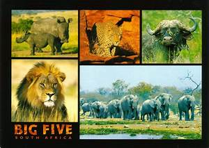 "Big Five, South Africa | The ""Big 5"" - The animals of ..."