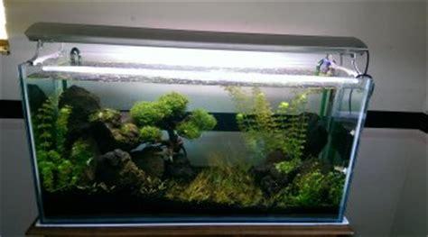 quel poisson pour un aquarium de 20 litres