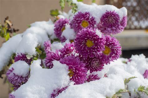 plante exterieur d hiver photo de fleur une pensee fleuriste
