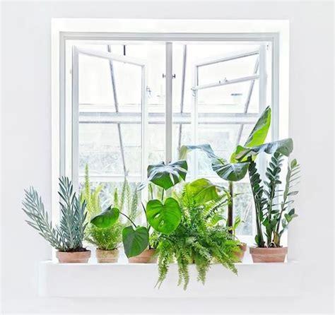 les 25 meilleures id 233 es concernant plantes d 233 polluantes sur plante interieur ombre